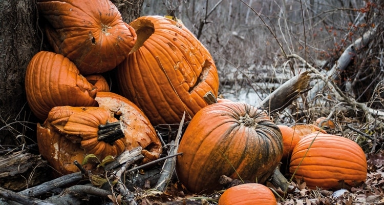 What to do with Halloween pumpkins 1