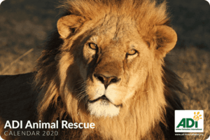 Use Your Christmas Shop to Support Animals in Need 1