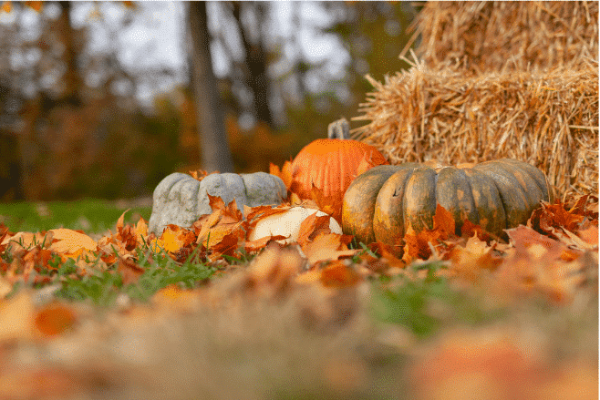 13 ways to have a low-waste Halloween