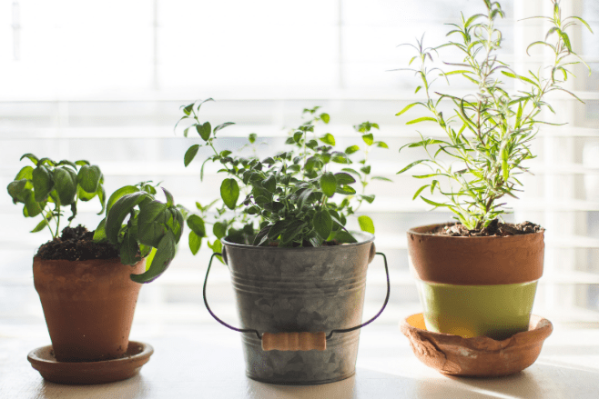 How to start an eco-friendly indoor garden in your kitchen